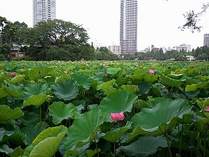 2011-08-01 06_42_30hasu.jpg