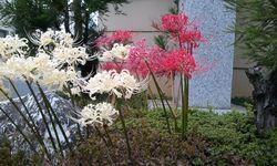 2011-10-02 06_49_47akasiro.jpg