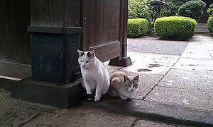 2011-10-06 07_15_40neko.jpg