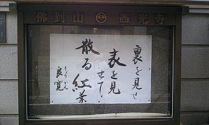 2011-10-28 06_54_38momizi.jpg