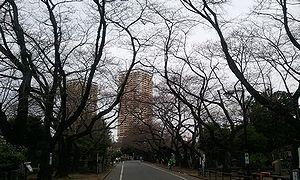 2012-03-30 06_40_24namiki.jpg