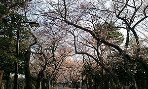 2012-04-05 06_42_07並木.jpg