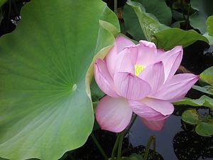 上野 花.jpg
