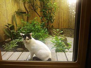 気遣い猫.jpg