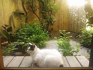 くつろぐ猫.jpg