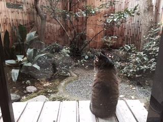 猫1er.jpg