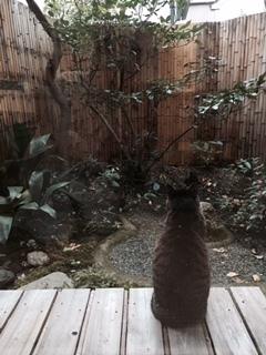 猫2r.jpg