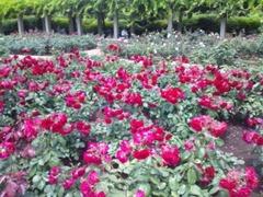 神代植物公園にて!