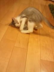 子猫を満喫!