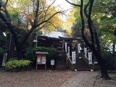 諏方神社のイチョウも色付きました