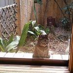 近所のボス猫