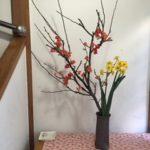 木瓜(ボケ)と水仙