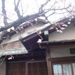 小唄江戸川教室 春の訪れ