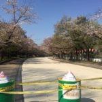 上野公園から不忍の池