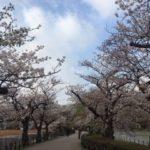 小唄 「葉桜や」