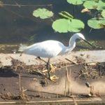 「鳥たちの時間」池田政治